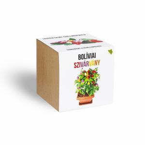 boliviai-szivarvany-chili-paprika-novenyem_novenyem_fa_kaspoban